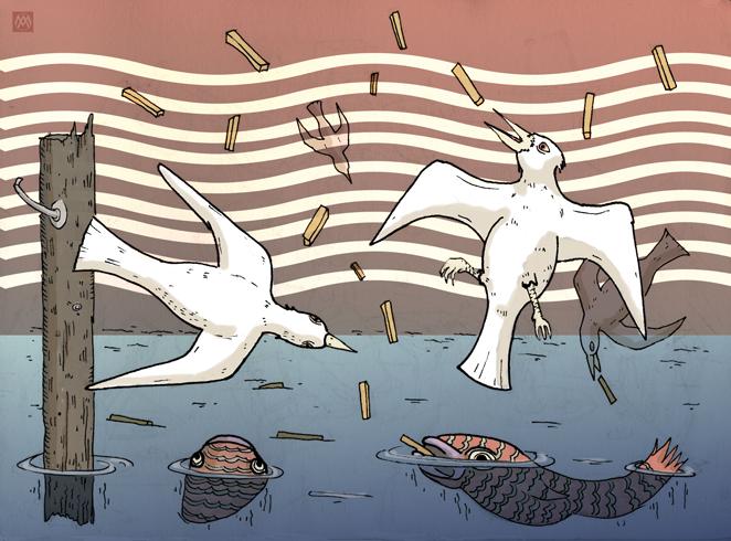 fish and gulls