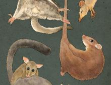 possums n gliders