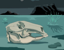 roo skull – Australian nature book commissioned proposal